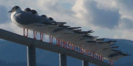 Birds on a rail banner